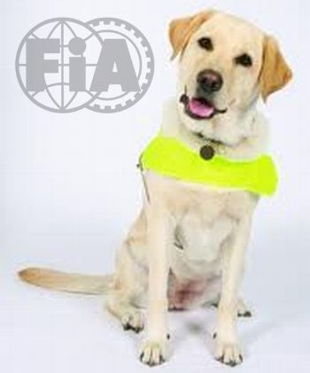 F1 Guide Dog